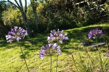The garden is planted for season colour.