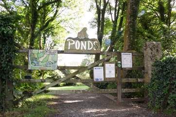 Just up the lane from Roskillys Farm and tea shop are the ponds which offer lovely shaded walks around the pretty gardens.