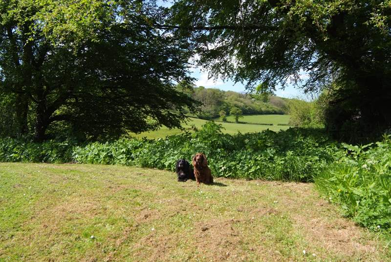 There is a wonderful view through the trees and across the fields beyond. Four legged friends just love it here.