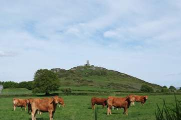 The little church on top of the Tor with grazing cattle in the fields below.