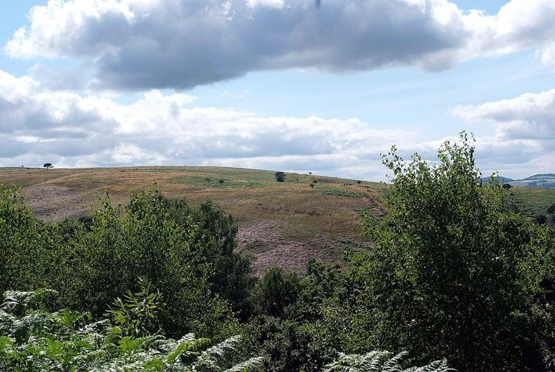 The Quantock Hills are a stunning Area of Outstanding Natural Beauty.