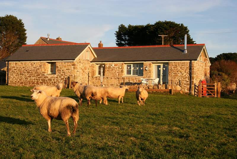 Bolankan Barn overlooks fields where grazing sheep and sometimes bouncing lambs are your neighbours!