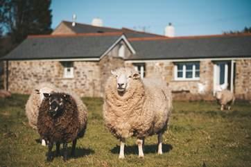 Meet the friendly neighbours.