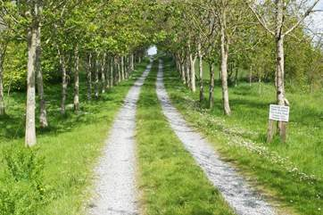 The tree-lined lane leading to the cottage at the top.