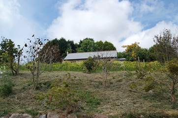 Sitting high on the hillside, Bolivar Barn is totally separate from the Owners' house, however clever planting in the garden will give the barn additional privacy.