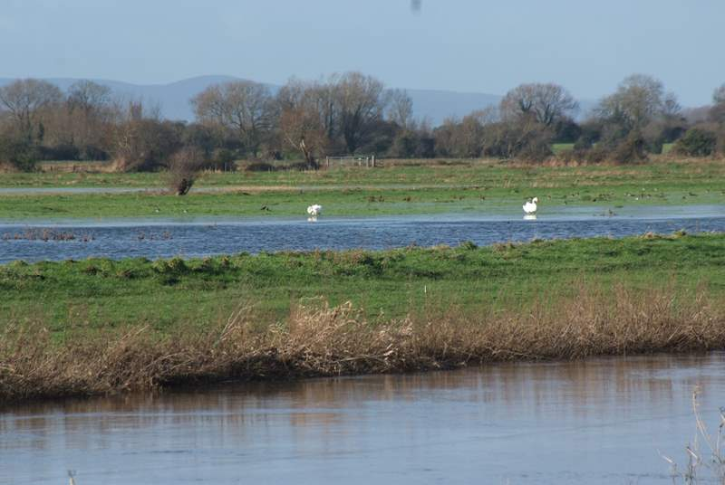 The Somerset Levels are perfect for watching wildlife. There are several nearby RSPB reserves just a short distance from the barn