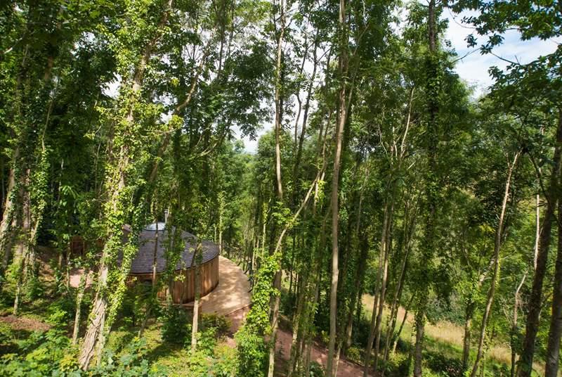 Stunning cedar clad Owl Yurt.