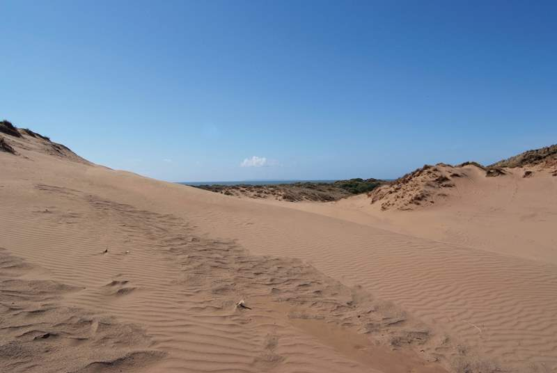 Explore the World Heritage Site at Braunton Burrows - the largest expanse of sand dunes in the UK!