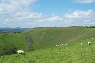 The Iron Age hill fort at Eggardon Hill is a short drive from West Farm.