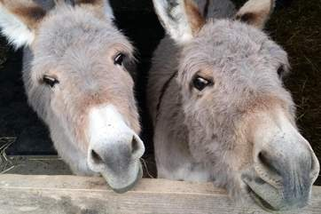The Owners have the cutest pair of donkeys...