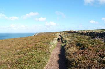 Dogs will love the clifftop walks nearby.