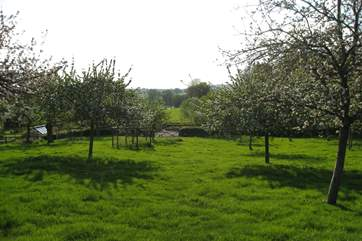 This lovely orchard is just behind the Hayloft - there are sometimes sheep grazing here. Such a traditional sight.