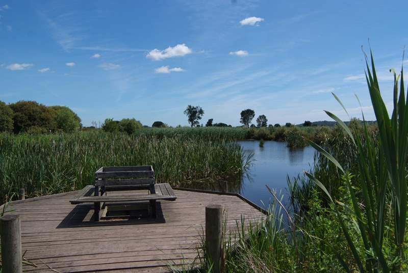 The stunning and unique Somerset Levels are on our doorstep, with ancient drovers tracks and several renowned RSPB wildlife sites. This is  Greylakes, just a short drive away.