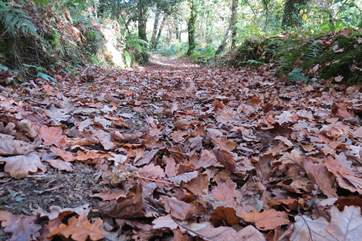 The autumn leaves form a wonderful carpet throughout the woodland walks