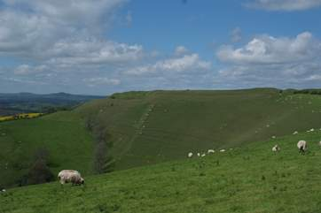 Eggardon Hill, an Iron Age hill fort overlooks West Hembury Farm; the views from the top are spectacular.