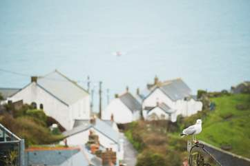The view across the rooftops where you will see the seagulls perching.