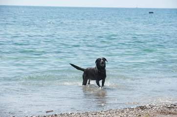 Your four-legged friend will have such a great time on the beach - it's dog-friendly all year long.