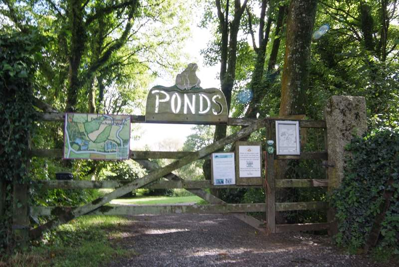 Roskillys ponds are just up from the ice cream parlour, a quiet place to wander in the shade around the ponds and through the trees.