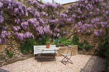 There is a very sheltered outside seating area, a little courtyard style garden,  with this stunning wisteria to enjoy.