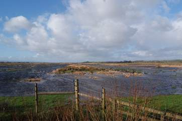 The Somerset Levels are nearby - with some fantastic RSPB wildlife sites. This is at Greylakes.