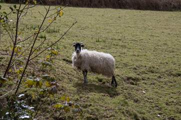 One of your immediate neighbours, please ensure your dog is always on a lead around  livestock.