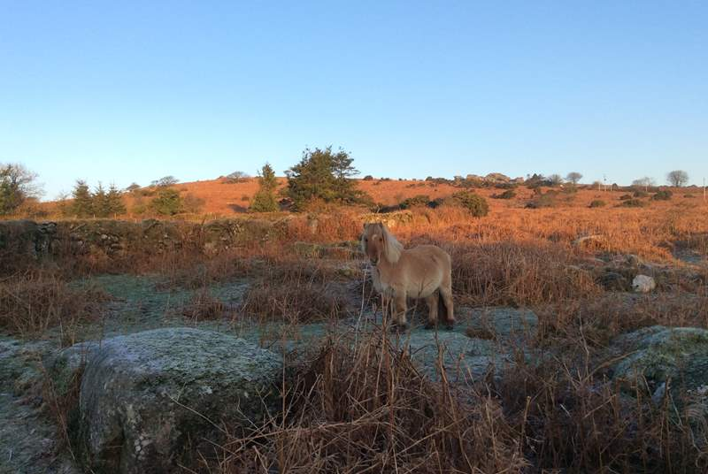 A frosty Dartmoor morning.