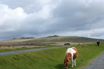 Get out and about and experience the beauty of Dartmoor.