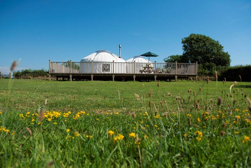 Rosewood Yurt sits proud on its huge deck overlooking open countryside.