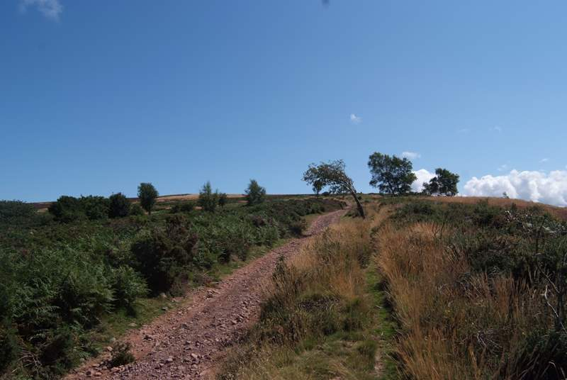 The hills are criss-crossed with ancient pathways such as the Coleridge Way.
