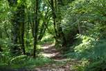 You are free to roam the Owner's woodland.