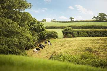 The cows in the adjoining fields come from the Owners' family farm close by.