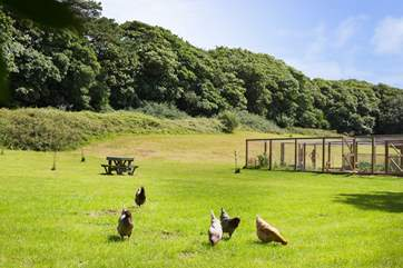 Wander the meadow and meet the chickens.
