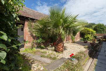 This is your very own tropical palm tree - this photo shows the path to the other cottages.  The cottage and your courtyard area are just out of this shot to the right.