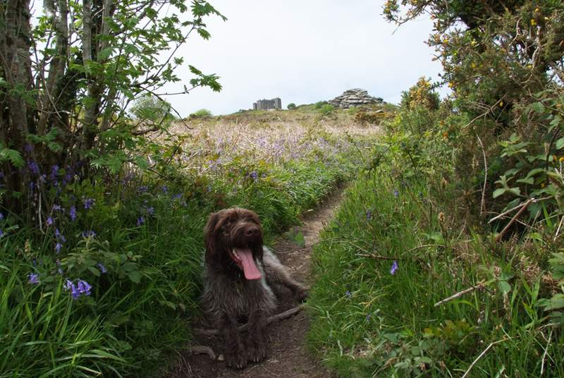 Your four-legged friend will enjoy exploring the trails too!