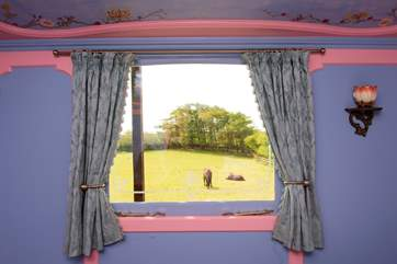 Watch the ponies playing in the meadow from the comfort of your bed - perfect!