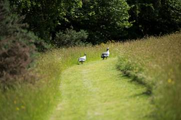 You may even have some feathered friends join you whilst exploring the 30 acres.