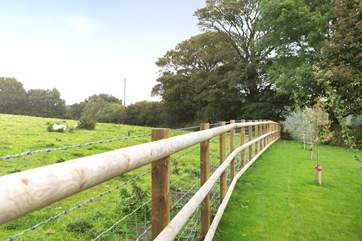 The fence between the garden and field is stock-proofed so dogs can't get through.