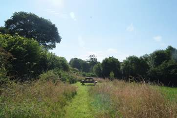 A mown path follows on from the woodland path, through through the meadow to....?