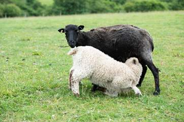 There are a variety of animals on the farm (separate from your glamping meadow).