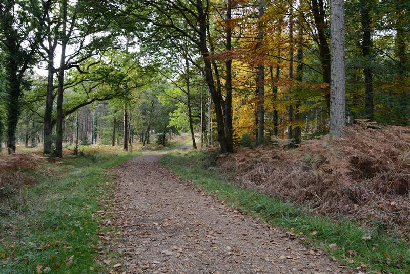 The New Forest has miles of footpaths and cycle tracks through ancient woodland.
