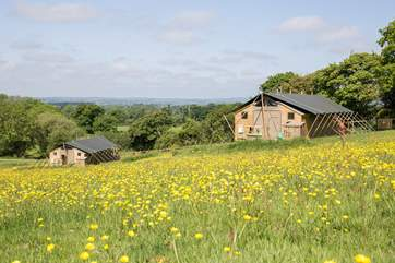 What a fabulous setting, the wild flower meadow is your to play in.