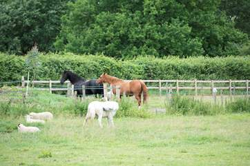Horses and sheep graze the surrounding land.