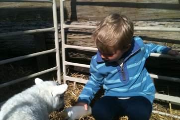 Children will love seeing the animals at Bittles Brook Farm.