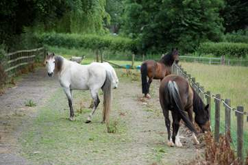 There is an equestrian facility at the farm.