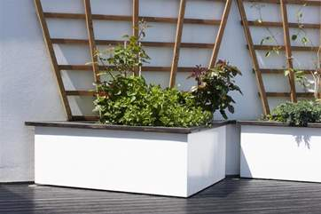 Garden 'greenery' on the roof terrace.