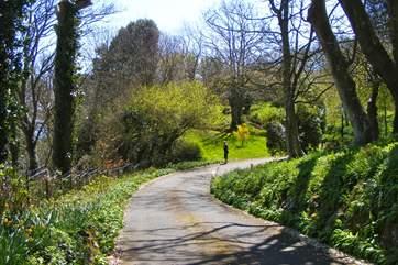 Long private driveway to Luccombe Chine House