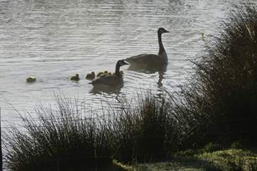 The lake provides a great environment for this stunning little family.