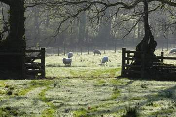 Wildlife and livestock roam freely throughout the grounds.
