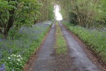 The lane down to the property. A sight for sore eyes after any journey.