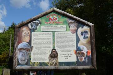 Nearby Monkey World is a great day out for all the family.